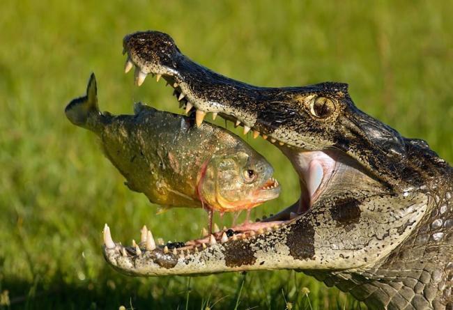 Удачные фото с животными, сделанные в подходящий момент
