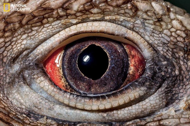 Внутри глаза: макрофотографии от Дэвида Лииттшвагера
