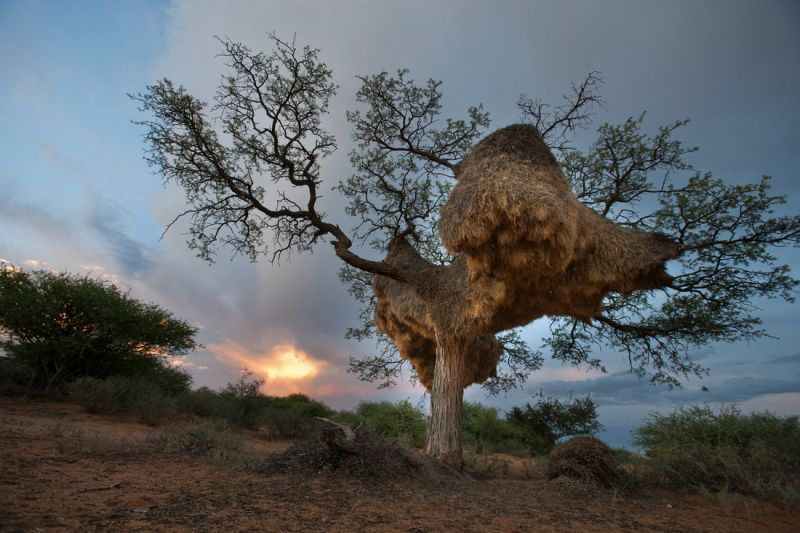 Восхитительные фотографии Африки от Майкла Полицы