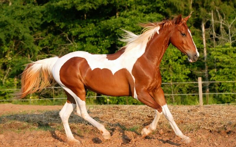 10 самых известных пород лошадей