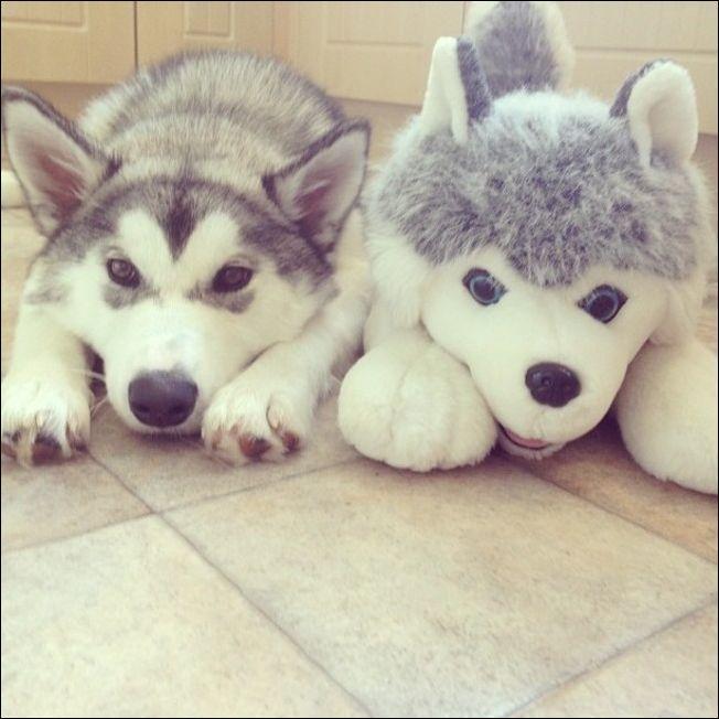 25 животных, которые нашли своих игрушечных двойников