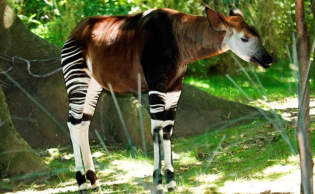 9 удивительных животных, которые могли бы считаться мифическими