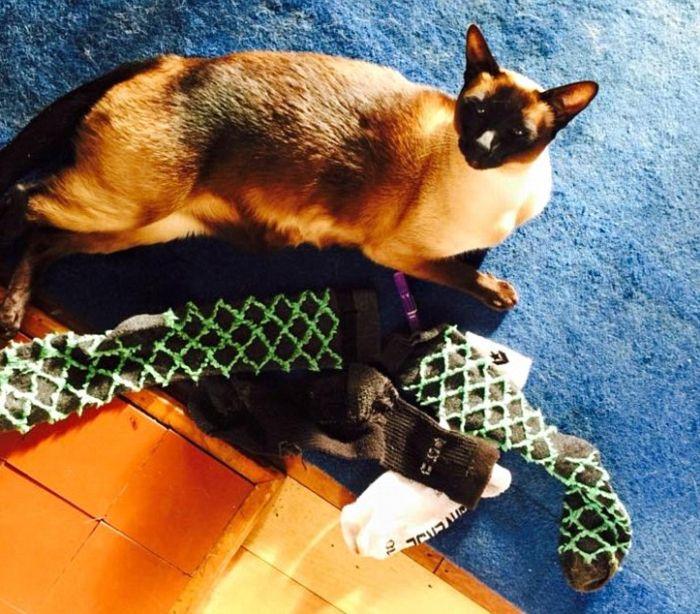 Кот-воришка крал соседские носки и нижнее белье