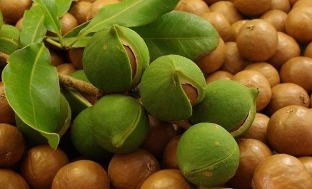 Самый дорогой орех в мире Макадамия