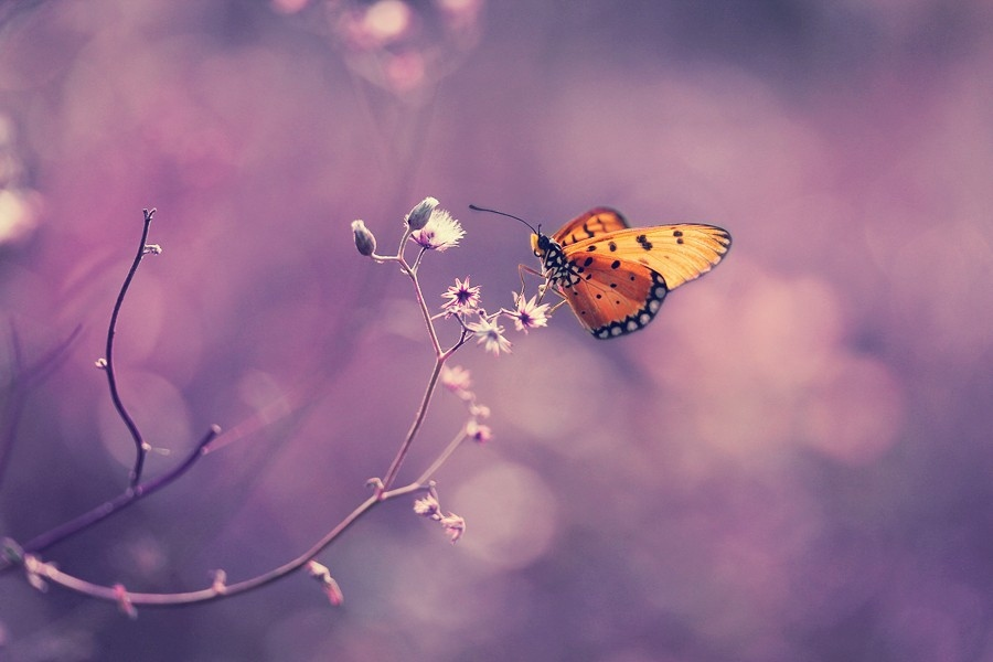 Макро фотографии насекомых от Динса Сильвера