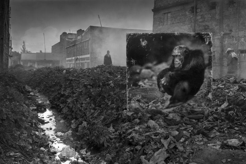 Портреты животных там, где они больше не живут