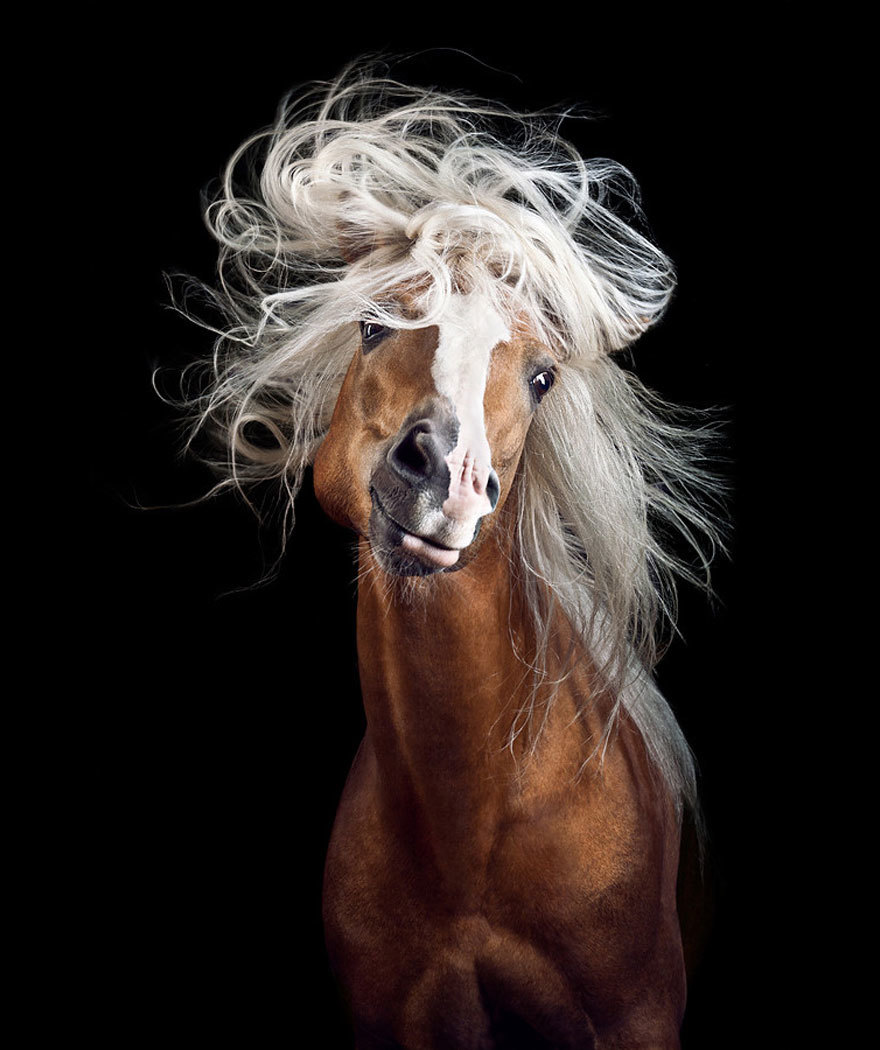 Потрясающие фотографии лошадей от Вибке Хаас
