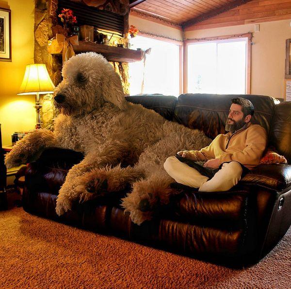 Приключения фотографа Кристофера Клайна и его собаки-великана