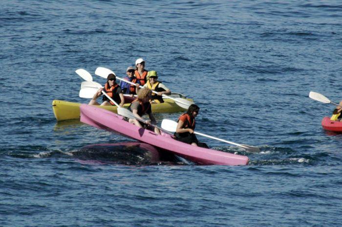 Туристы прокатились на спине кита