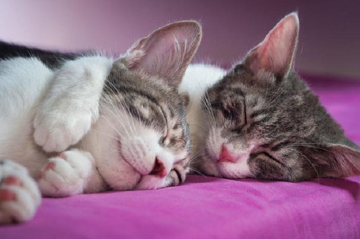 Влюблённые коты на милейших фотографиях