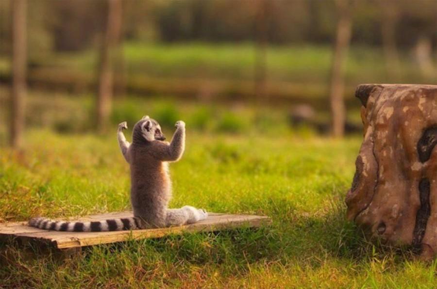 Животные, которые знают, как привести себя в форму к весне