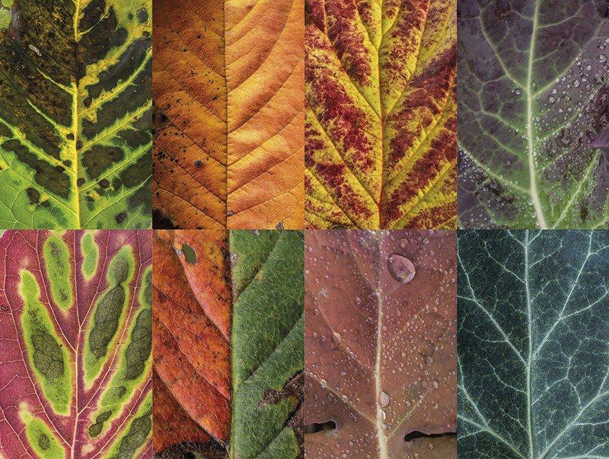 Красота и разнообразие листьев от фотографа Sepia