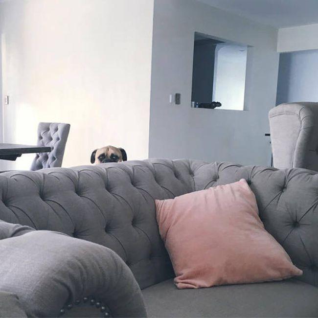 Пес, который думает, что его не заметили