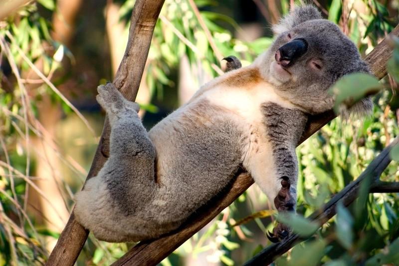 20 забавных животных, которые умеют соблазнять и очаровывать