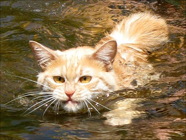 Коты и вода
