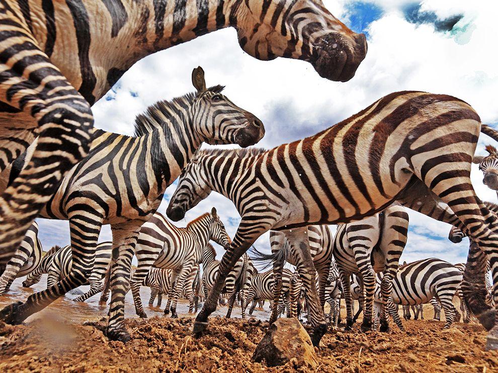 Лучшие фотографии мая 2016 от National Geographic