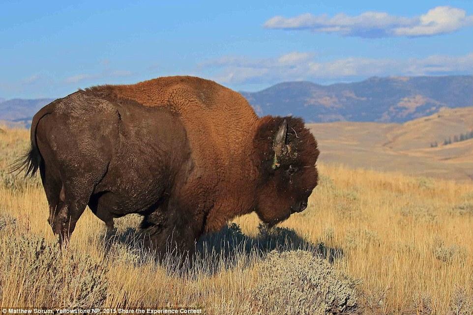 Победители конкурса фотографий из национальных парков США
