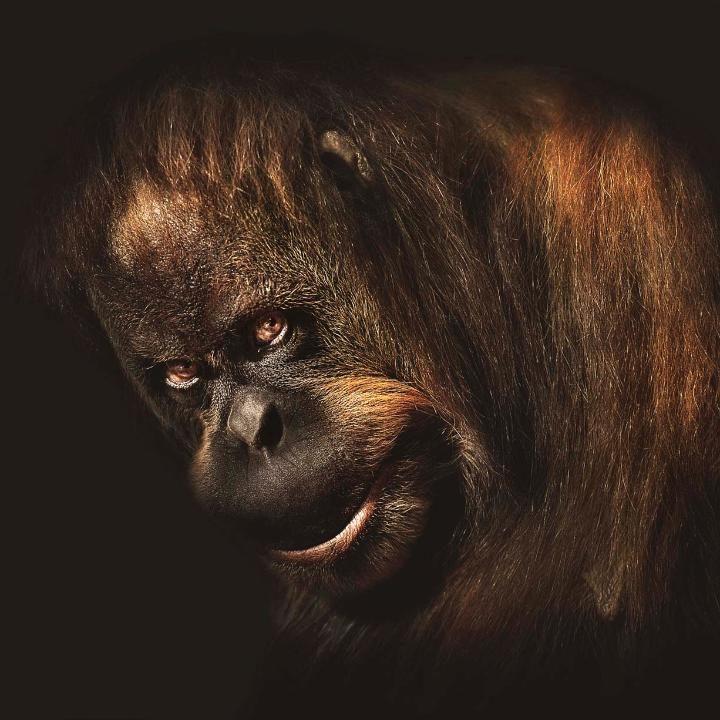 Портреты животных с человеческим выражением лица