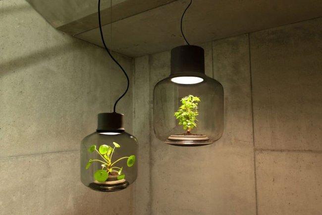 Растение в лампе, не требующее ухода
