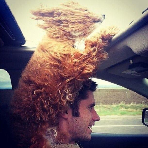 Собаки, которые обожают ветер и поездки на машине