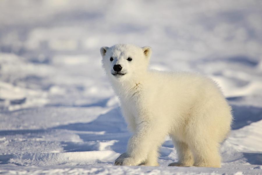 30 милых детёнышей животных в дикой природе