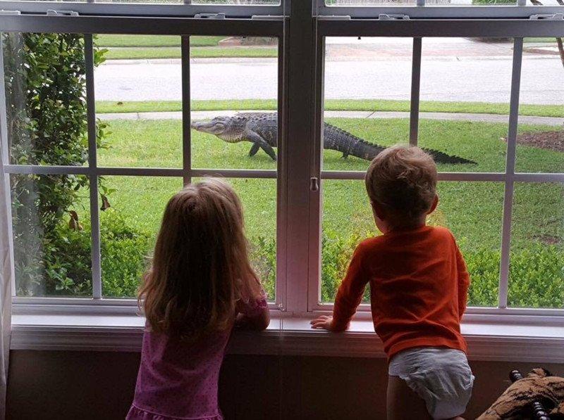 Бродячие хищники во Флориде