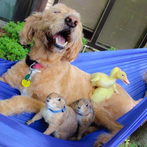 Луговые собачки подружились со всеми животными в округе