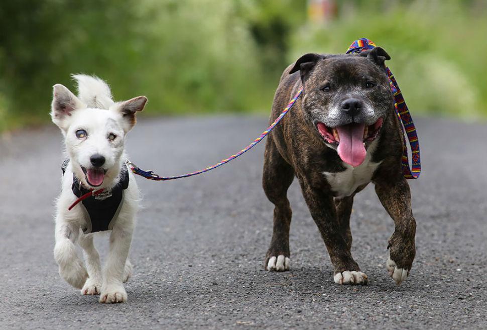Неразлучная пара псов —  Базз и слепой Гленн