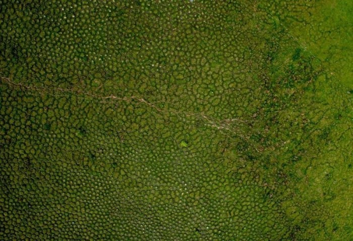 Сотни загадочных холмов в болотах Южной Америки