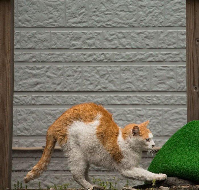 Уличные кошки Токио от фотографа Масаюки Оки