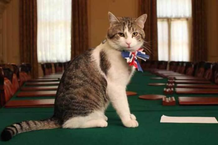 5 фактов о самом ленивом коте британского правительства