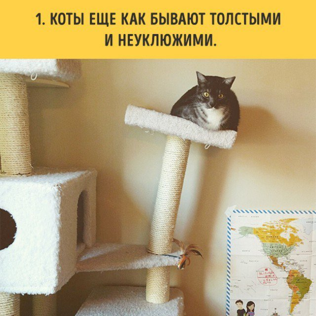 Если вы решитесь завести кота
