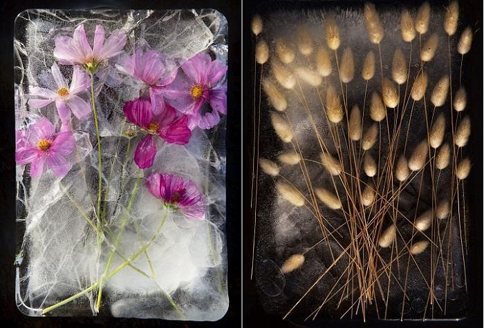 Фотографии цветов, замороженных в ледяных глыбах