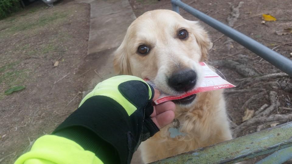Собака расстраивалась, когда не получала почту, и почтальон начал писать ей письма