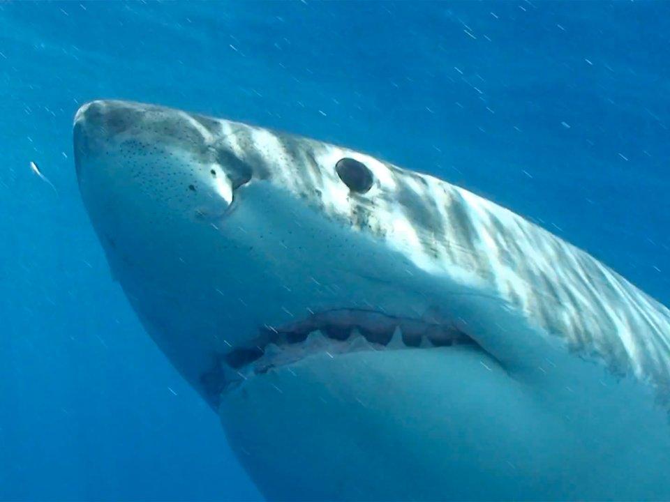 15 самых опасных животных в мире