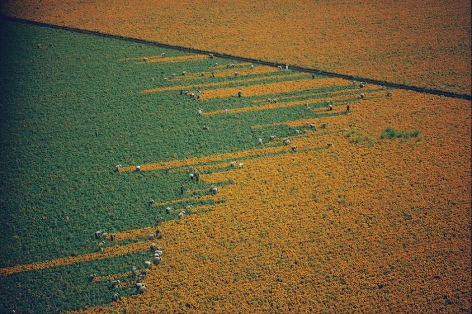 Как собирают урожай на полях в разных странах мира