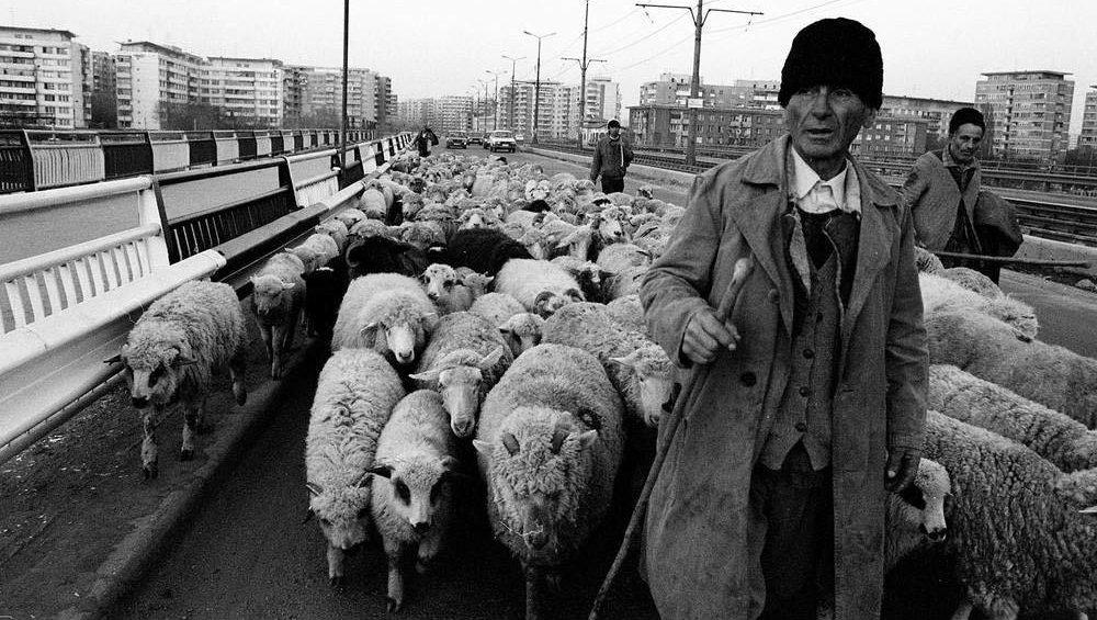 Румыния 90-х, где стада овец перегораживали оживленные улицы