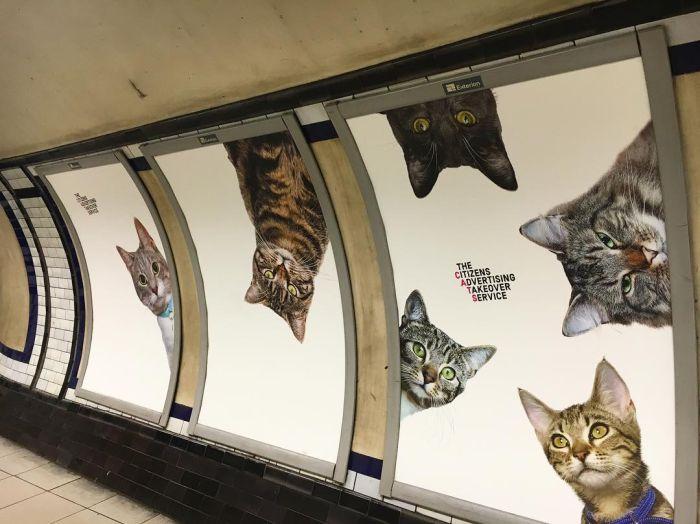 Станцию метро в Лондоне украсили фотографиями кошек из приютов