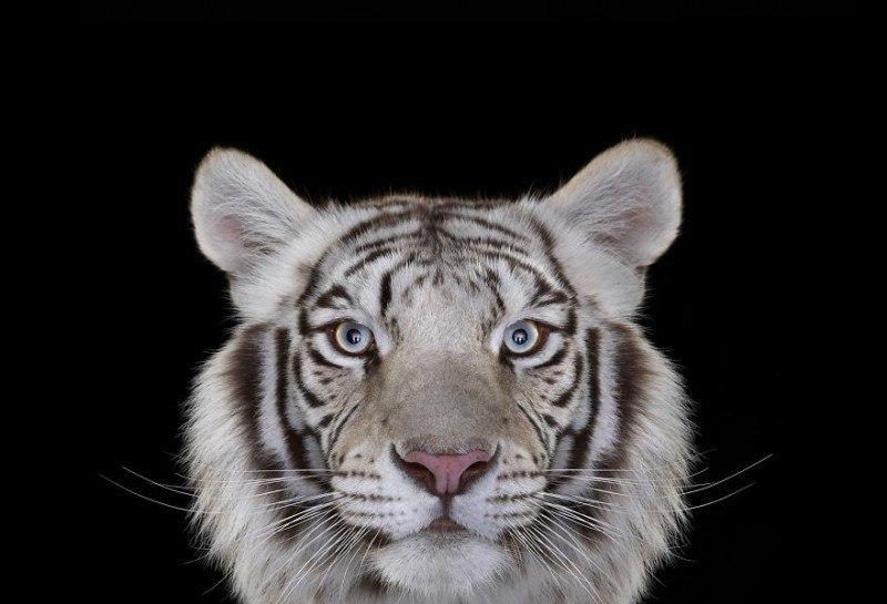 Глаза в глаза: портреты диких животных