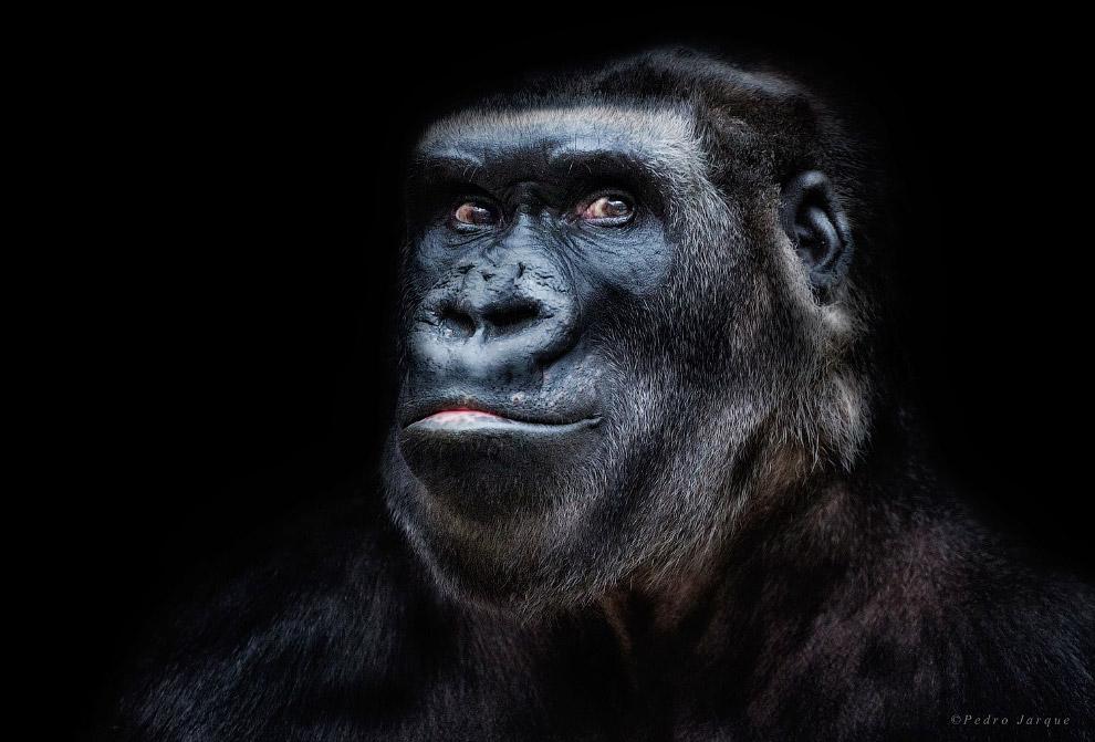 Портреты диких животных от Педро Хорке