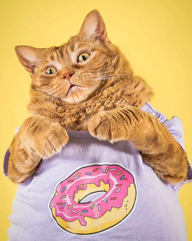 Толстые коты и их шарм