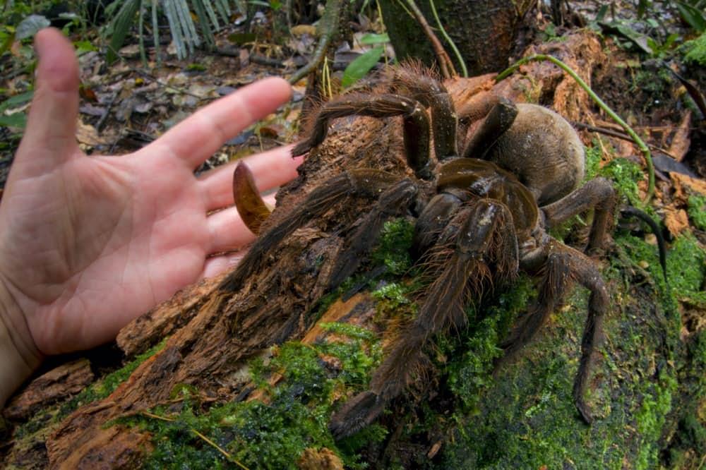 10 аномально-крупных животных