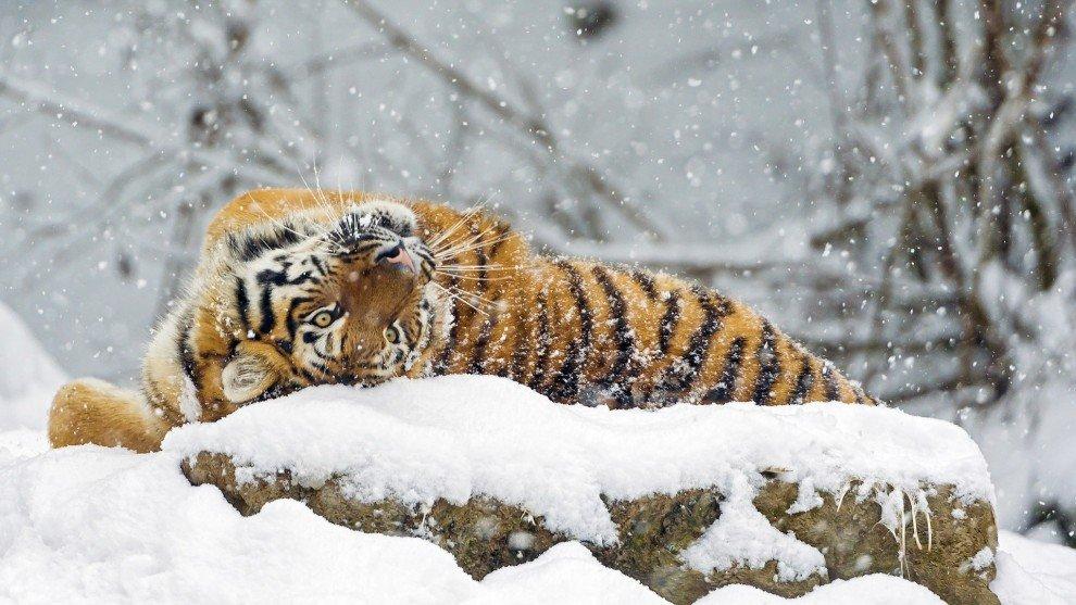 Животные радуются снегу