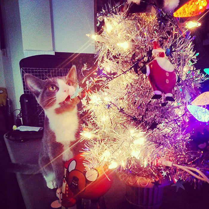 Коты готовятся к праздникам: на елках и под елками