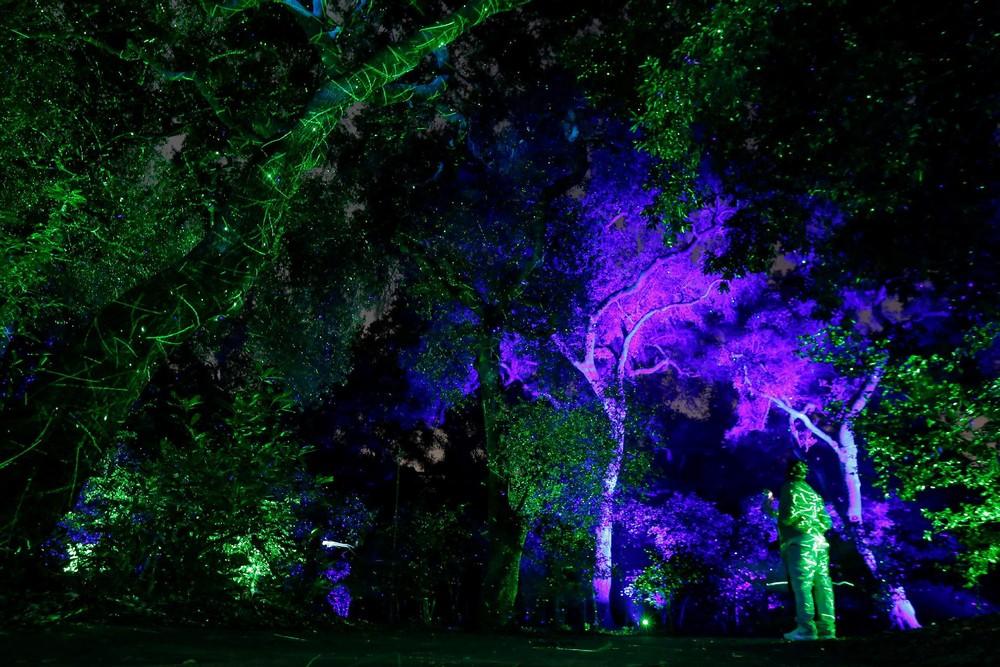 Лес света — выставка в США