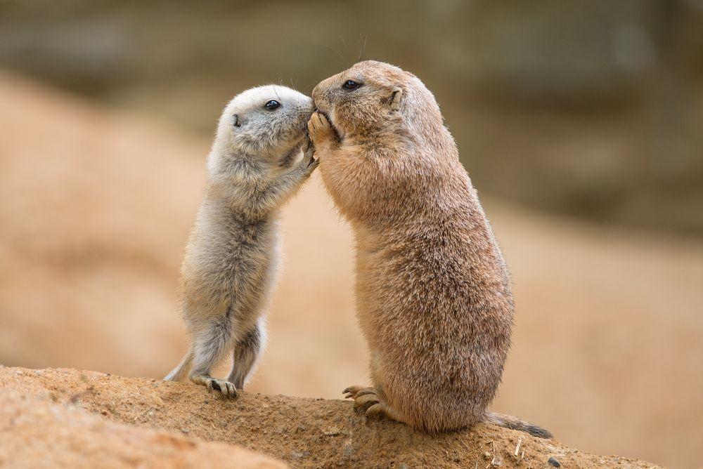 Как животные общаются между собой: 5 самых поразительных способов