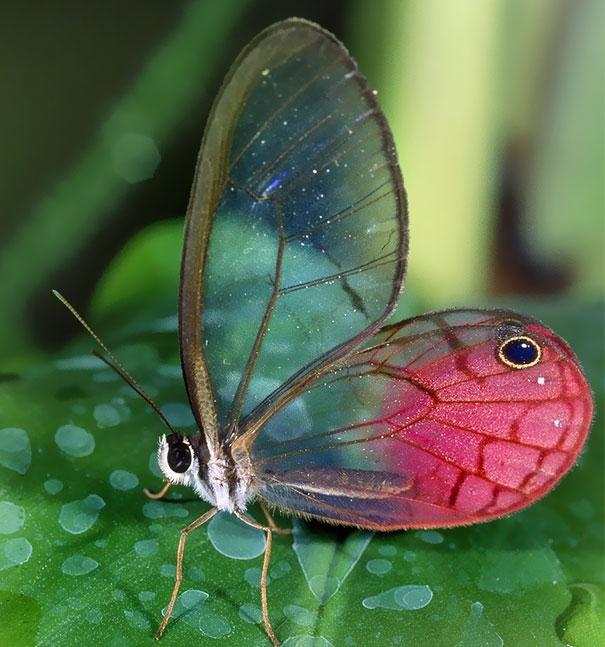 Прозрачные животные, в существование которых сложно поверить