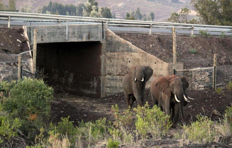 Замечательные экодуки: мосты для животных со всего мира