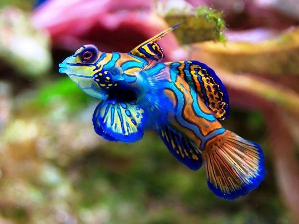 25 самых фантастичных морских обитателей