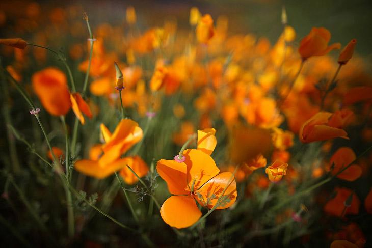 Буйство ярких красок в Калифорнии